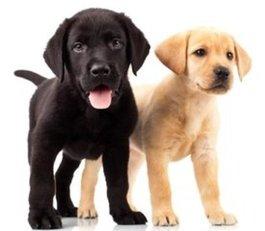Set voor 2 honden