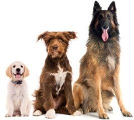 Set voor 3 honden