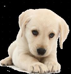 Speciaal voor puppy
