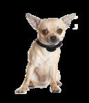 Anti blafband OHS25 geluid en stroom kleine hond