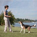Trainingshalsband Petsafe 6014 kleine hond 3,6kg tot 18kg