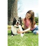 Anti blafband Petsafe 6064 kleine hond vanaf 3,6kg