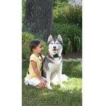 Losse zender Onzichtbare omheining hardleerse en grote honden