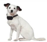 Trainingshalsband OHS 776  1-3 honden 800m_
