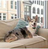 DEMOMODEL! Oplaadbare Anti blafband Petsafe PBC19-16448 ook tegen janken kleine & gevoelige hond_