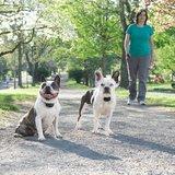 Trainingshalsband Petsafe PDT19-16026 bereik 300m kleine en gevoelige hond_
