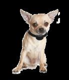 Anti blafband OHS25 geluid en stroom kleine hond_