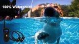 Trainingsband type 18-620 voor hond 600 meter, zwemwatervast, 16 levels instelbaar, geluid schok en trillen
