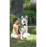 Onzichtbare omheining Petsafe hardleerse en grote honden _