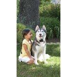 extra ontvanger grote en hardleerse hond wired fence