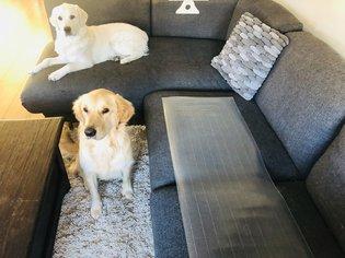 Trainingsmat OHS27 houdt uw hond van de bank of verboden gebied