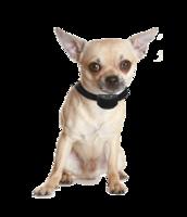 Anti blafband met geluid en stroom speciaal voor kleine honden (1,5-10 kg) OHS 25 oplaadbaar (spat) watervast