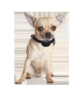 Anti blafband met geluid en statische correctie voor kleine honden   (1,5-10 kg) OHS 25 oplaadbaar (spat) watervast