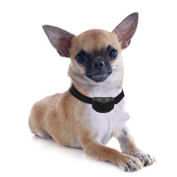 Anti blafband met trilfunctie voor kleine hond   (vanaf 1,5 kg) OHS 26 oplaadbaar (spat) watervast